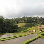Surrounding ricefields