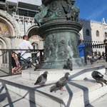 Pigeons sunbathing in the square