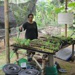 Vegetable and Fruit garden
