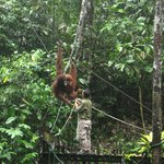 The Kuching Swing