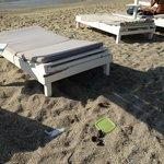 Escrementi in spiaggia