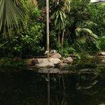 Tropical rain forest area