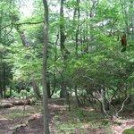 Foto de Abrams Creek Retreat & Campground