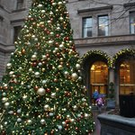 Christmas Tree in Courtyard December 2013