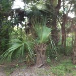 Campground Site- Koreshan State Historic Site