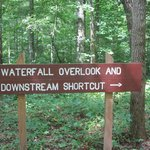Take the Downstream Shortcut