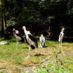 Duisburg Zoo, Germany
