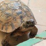 Hello tortoise :-)