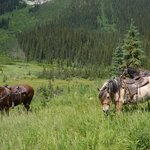 Hot Springs Ride (horses grazing and posing for a picture)