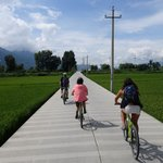 Borrowed Center's bikes and rode through rice fields