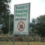 no rabbit pie in queensland
