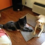 My two dogs in the room. The linoleum floors are a great idea if you're worried about messes.