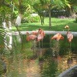 flamingos live on the resort, stunning!
