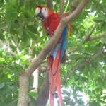 the parrot like to fly around the trees in the lobby area