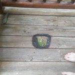 large burn hole on deck