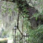 Lamp Post at Plantation House