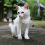 The cats of Villa Molek