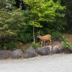 Deer putting on a show at the parking lot