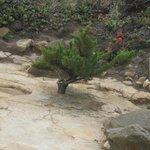 Natural bonsai tree
