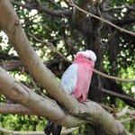попугайчики хороши