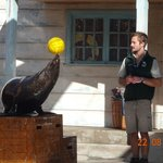 Seal show