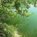 Черепаха в горном озере