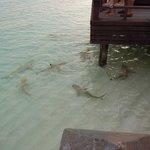 6pm shark feeding at Anchorage Bar
