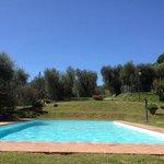 La piscina immersa tra gli ulivi