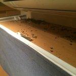 Cadavres d'insectes