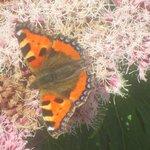 Flora & fauna wonderful