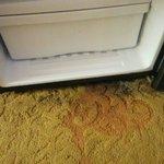 Black heavy mold under refrigerator.