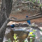 Birdbaths outside most cabins attract some beauties.