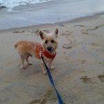 our dog on the beach