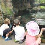 Kids enjoying shark feeding