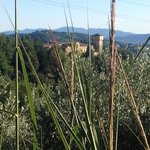 Relais Il Canalicchio through the Olive groves