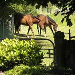 Horse livery grazing