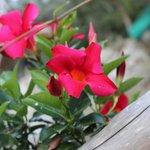 Aiuole di fiori circondano Casarufolo