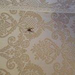 Habitantes con los que convives en la habitacion entre mosquitos y enormes ciempiés caseros