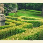 beautiful maze topiary in the garden