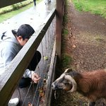Lovely friendly animals.