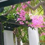 Плетеная крыша веранды