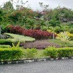 Some area foliage