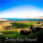 Destiny Ridge Vineyard