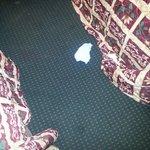 Diaper found under the bed