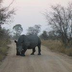 Foto de Imbali Safari Lodge