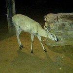 nightly visitor