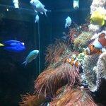 exemplares de um dos aquarios