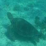 Swam with lots of turtles!