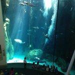 divers feeding fish in the main aquarium