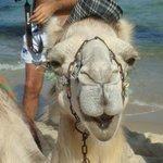 Il cammello sulla spiaggia